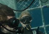 Фильм Над глубиной: Хроника выживания / Cage Dive (2017) - cцена 2