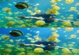 Сцена из фильма Последний риф 3D / The Last Reef 3D (2012) Последний риф 3D сцена 20