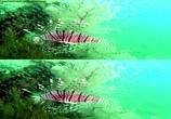 Сцена из фильма Кораллы 3Д: Магия Индо-Тихоокеании в 3Д / Corals 3D: Magic of the Indo-Pacific 3D (2012) Кораллы 3Д: Магия Индо-Тихоокеании в 3Д сцена 2