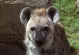 Сцена из фильма Книга джунглей: История Маугли / The Jungle Book: Mowgli's Story (1998) Книга джунглей: История Маугли сцена 6