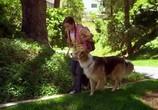 Сцена из фильма Лохматое чудище / Monster Mutt (2011) Лохматое чудище сцена 1