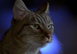 Сцена из фильма Чокнутый профессор 2 / Nutty Professor II: The Klumps (2000) Чокнутый профессор 2 сцена 5