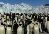 Сцена из фильма Дикая Антарктида / Wild Antarctica (2015) Дикая Антарктида сцена 4