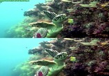 Сцена из фильма Кораллы 3Д: Магия Индо-Тихоокеании в 3Д / Corals 3D: Magic of the Indo-Pacific 3D (2012) Кораллы 3Д: Магия Индо-Тихоокеании в 3Д сцена 3