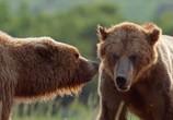 Сцена из фильма Медведи / DisneyNature: Bears (2014) Медведи сцена 2