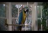 Сцена из фильма Джеймс Бонд - 007 : Искры из глаз / The Living Daylights (1987) Джеймс Бонд - 007 : Искры из глаз сцена 10
