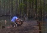 Фильм Болотная тварь / Swamp Thing (1982) - cцена 3