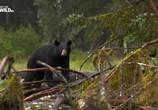 Сцена из фильма Гризли Аляски бросают вызов / Alaska's Grizzly Gauntlet (2018) Гризли Аляски бросают вызов сцена 4
