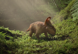 Сцена из фильма Прогулки с динозаврами 3D / Walking with Dinosaurs 3D (2013)