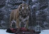 Сцена из фильма Великий тигр / Daeho (2015) Великий тигр сцена 3