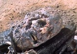 Сцена из фильма Король муравьев / King of the Ants (2003) Король муравьев сцена 2