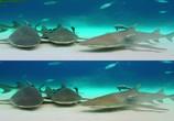 Сцена из фильма Последний риф 3D / The Last Reef 3D (2012) Последний риф 3D сцена 19