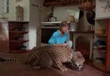 Фильм Гепард / Cheetah (1989) - cцена 5