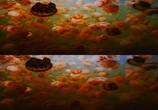 Сцена из фильма Последний риф 3D / The Last Reef 3D (2012) Последний риф 3D сцена 13