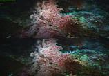 Сцена из фильма Последний риф 3D / The Last Reef 3D (2012) Последний риф 3D сцена 16