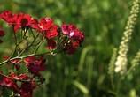 ТВ BluScenes: Цветущие сады / BluScenes: Flowering Gardensание (2012) - cцена 8