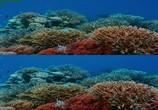 Сцена из фильма Последний риф 3D / The Last Reef 3D (2012) Последний риф 3D сцена 3