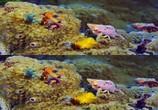 Сцена из фильма Последний риф 3D / The Last Reef 3D (2012) Последний риф 3D сцена 11