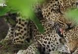 ТВ Дикие места Африки / Africa's Wild Side (2018) - cцена 3