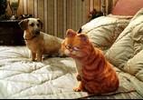 Сцена из фильма Гарфилд 2: История двух кошечек  / Garfield: A Tail of Two Kitties (2006) Гарфилд 2