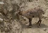 ТВ Дикая природа Китая. Царство дикой природы Тибета / China's wild side (2017) - cцена 4