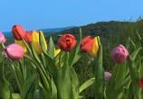 ТВ BluScenes: Цветущие сады / BluScenes: Flowering Gardensание (2012) - cцена 3