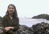 Сцена из фильма National Geographic. Следующее мегацунами / The Next Mega Tsunami (2014) National Geographic. Следующее мегацунами сцена 6
