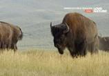 ТВ Времена года в дикой природе Америки / America's Wild Seasons (2019) - cцена 1