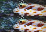 Сцена из фильма Последний риф 3D / The Last Reef 3D (2012) Последний риф 3D сцена 5