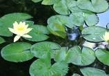 ТВ BluScenes: Цветущие сады / BluScenes: Flowering Gardensание (2012) - cцена 9