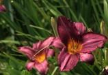 ТВ BluScenes: Цветущие сады / BluScenes: Flowering Gardensание (2012) - cцена 6