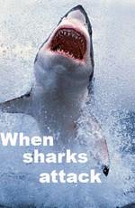 Когда акулы нападают