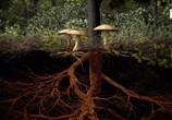 ТВ Тайное царство: Грибы, определившие наш мир / The Kingdom: How Fungi Made Our World (2018) - cцена 3