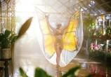 Сцена из фильма Редкая бабочка / The Butterfly Tree (2018)