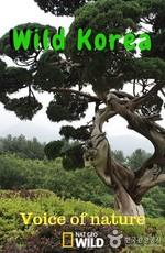 Дикая Корея. Голос природы