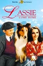 Лэсси возвращается домой