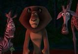 Сцена из фильма Рождественский Мадагаскар / Merry Madagascar (2009) Рождественский Мадагаскар сцена 6