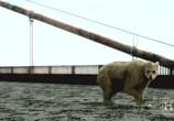 Сцена из фильма Будущее планеты: Жизнь после людей / Life After People (2008)