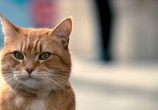 Сцена из фильма Уличный кот по кличке Боб / A Street Cat Named Bob (2016)
