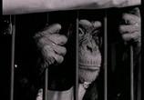 Сцена из фильма Обезьяньи проделки / Monkey Business (1952) Обезьяньи проделки сцена 1