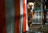 Фильм Кошки против собак: Месть Китти Галор / Cats & Dogs: The Revenge of Kitty Galore (2010) - cцена 3