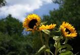ТВ BluScenes: Цветущие сады / BluScenes: Flowering Gardensание (2012) - cцена 1
