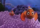 Мультфильм В поисках Немо / Finding Nemo (2003) - cцена 8