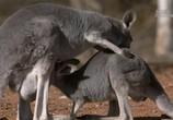 ТВ Планета мутантов. Австралия / Animal Planet: Mutant Planet. Australia (2010) - cцена 3