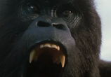Сцена из фильма Могучий Джо Янг / Mighty Joe Young (1998) Могучий Джо Янг сцена 1