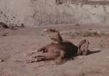 Сцена из фильма Земля Чато / Chato's Land (1972) Земля Чато сцена 3