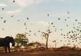 ТВ Дикие места Африки / Africa's Wild Side (2018) - cцена 2