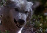 Фильм День животных / Day of the Animals (1977) - cцена 2
