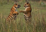 Сцена из фильма Банда тигриц / Tigress Blood (2014) Банда тигриц сцена 11
