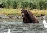 ТВ Заповедная Аляска / Into Alaska (2018) - cцена 5